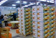 INCOFRUIT-ΗELLAS: Μείωση στις εξαγωγές νωπών φρούτων και λαχανικών