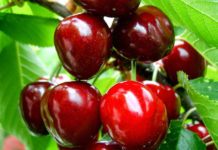 Ξεκινούν οι εξαγωγές ελληνικών φρούτων στην Κίνα