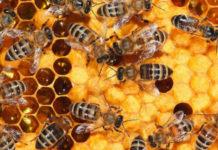 Οδηγός υλοποίησης του μελισσοκομικού προγράμματος 2017