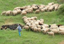 ΕΛΓΑ: Αποζημιώσεις 1,1 εκατ. ευρώ σε 1.081 κτηνοτρόφους