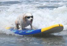 mathimata_surf